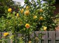 imagen 6 Estilos de arcos para tu jardín