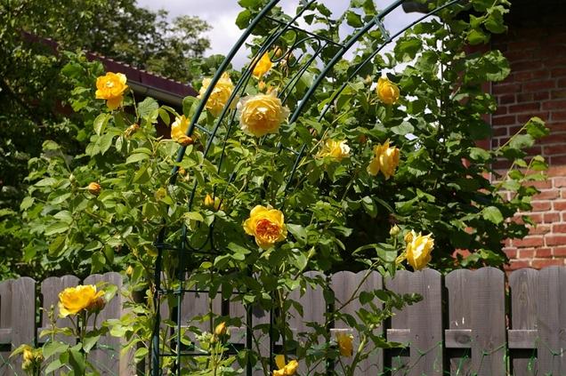 arco de flores para jardin