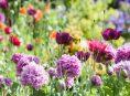 imagen 18 Plantas de flores para tu jardín
