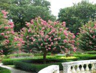 imagen 3 árboles que puedes plantar en tu jardín sin temor