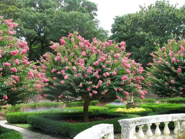 arboles que puedes plantar en tu jardin sin temor