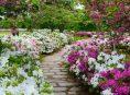 imagen 5 plantas japonesas para un jardín zen