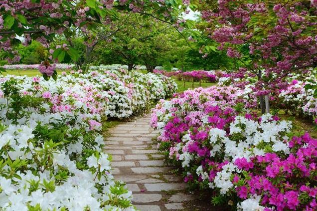5 plantas japonesas para un jardín zen