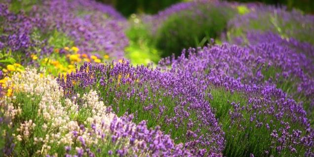 8 hierbas con flores hermosas y de gran sabor