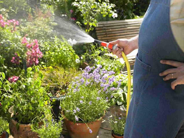 Manten tus plantas con vida mientras estas de vacaciones