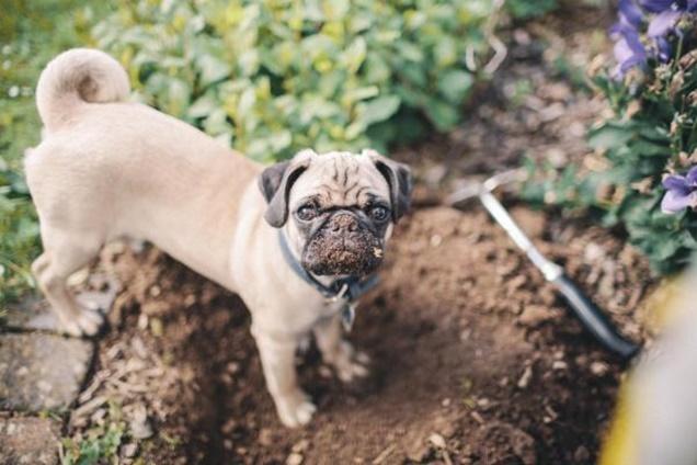 como hacer que mi mascota no destruya el jardin