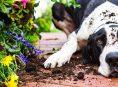 imagen ¿Cómo hacer que mi mascota no destruya el jardín?