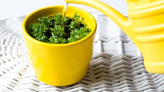 plantas de interior que precisan poco riego