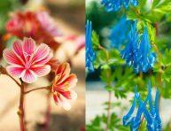 imagen 12 hermosas flores que te quitarán el aliento
