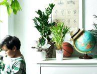 imagen 7 mejores plantas para el dormitorio infantil