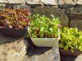 imagen Frutas, verduras y hierbas que puedes cultivar en macetas