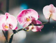 imagen Orquídeas, descubre sus cuidados, problemas y curiosidades