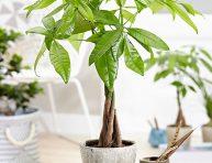 imagen 5 plantas de interior fáciles de mantener