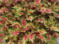 imagen Plantas anuales que le añaden color a tu jardín en verano