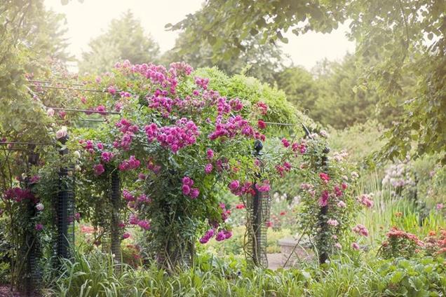 6 plantas para un jard n de caba a ingl s for Jardin en ingles