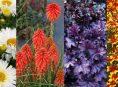 imagen 10+ variedades de plantas nuevas para el jardín