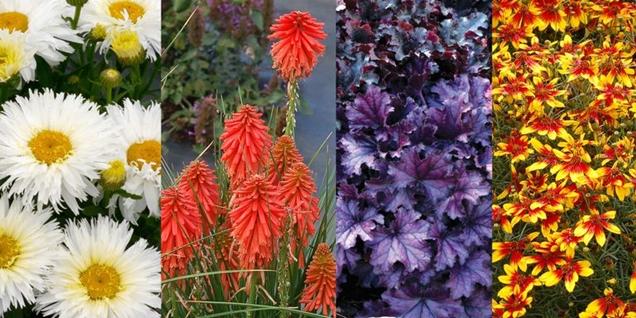 variedades de plantas nuevas para el jardin