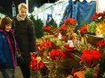 imagen 5 plantas navideñas para tu jardín y hogar