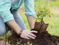 imagen Cómo trasplantar árboles y arbustos