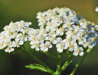 imagen Plantas perennes de larga duración