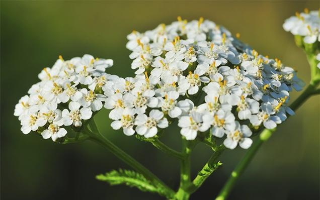 Plantas perennes de larga duracion