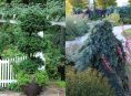 imagen 5 árboles de hoja perenne para pequeños jardines