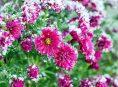 imagen Cuidados de las flores en invierno