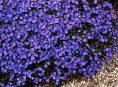 imagen 7 plantas con flores que adoran la sombra