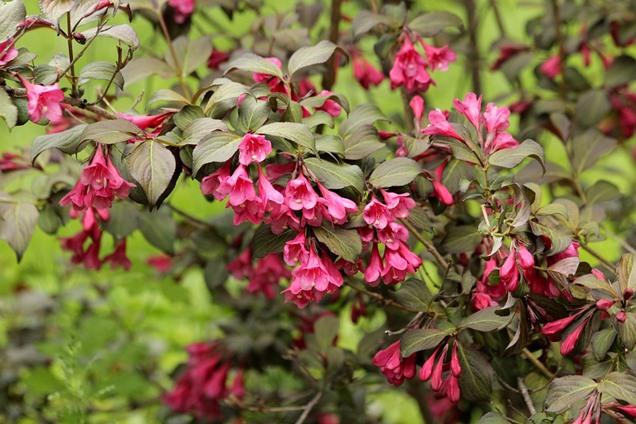 Arbustos coloridos para resaltar la belleza de tu patio
