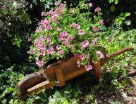 imagen 5 flores perfumadas que huelen a cítricos