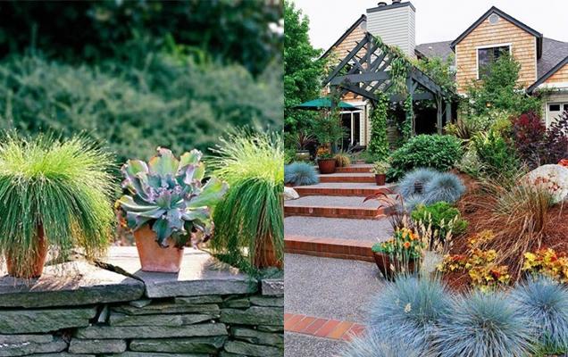 maneras de utilizar hierbas ornamentales