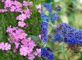 imagen 5 plantas perennes muy resistentes