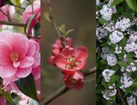 imagen Los mejores arbustos de flor para tu jardín