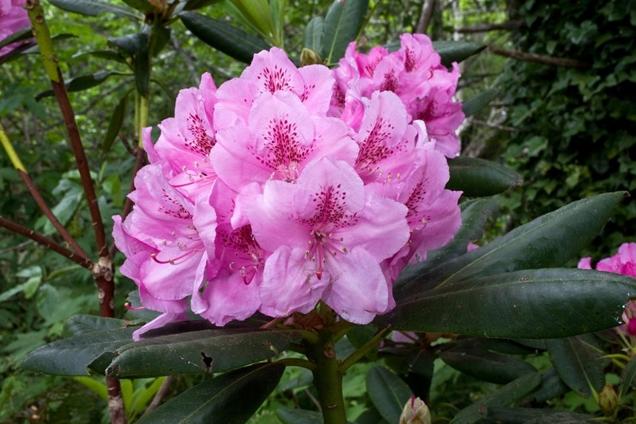 los mejores arbustos en flor para tu jard n