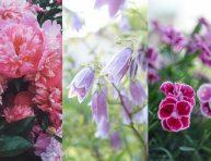 imagen Plantas perennes con flores que aman la luz del sol