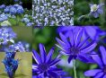 imagen 12 flores azules para embellecer tu jardín