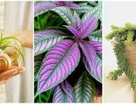 imagen 8 plantas sorprendentes y muy poco comunes