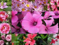 imagen 17 flores rosadas que deberías plantar en tu jardín