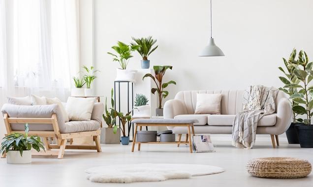 12 plantas de interior que purifican el aire de tu hogar - Plantas de interior que purifican el aire ...