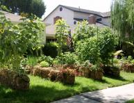 imagen ¿Por qué deberías agregar fardos de paja en el jardín?