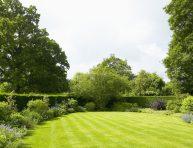 imagen Árboles y arbustos de rápido crecimiento