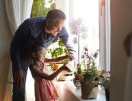 imagen 7 plantas de interior con flores para añadirle color a tu hogar
