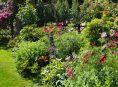 imagen Los 10 mejores arbustos de bajo mantenimiento