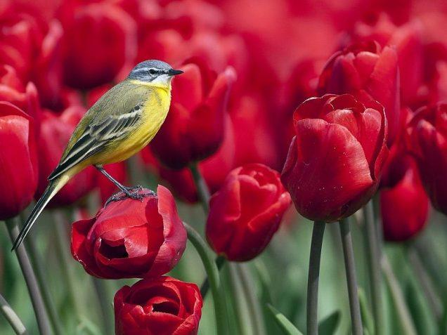 colores para atraer a los pajaros a tu patio