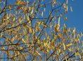 imagen 5 árboles que debes evitar plantar en tu patio