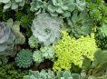 imagen 10 crasas y suculentas bellas para tu jardín