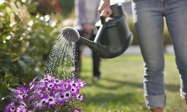 Con que frecuencia regar las plantas en macetas