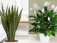 imagen 10 plantas que ayudarán a tener un microclima de tu hogar