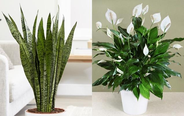 plantas que pueden mejorar el microclima de tu hogar