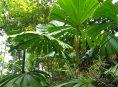 imagen 8 tipos diferentes de palmeras